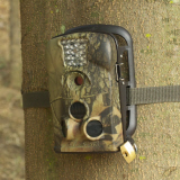 Wildlife Trail Cameras