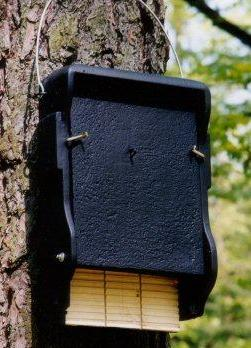 Woodcrete 1FF Bat Box