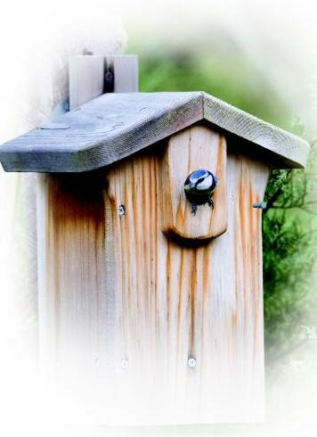 Cedar Plus Classic Nestbox 26mm hole
