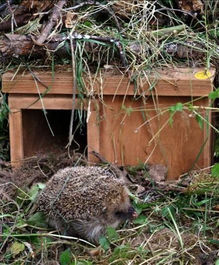 Hedgehog Nestbox