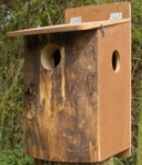 Squirrel Nestbox