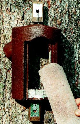 Woodcrete 2B Treecreeper Nestbox with removable front